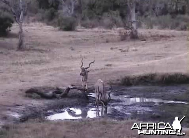 2 good representatives for a dream kudu hunt!