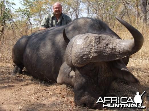 Cape Buffalo Zimbabwe