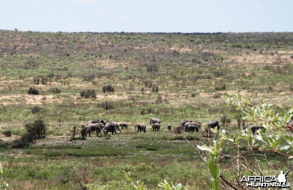 Elephant Danaib Omuramba Hereroland