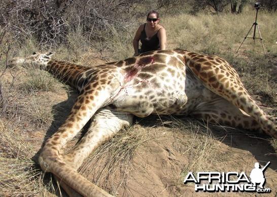 Giraffe 2010 375 HH