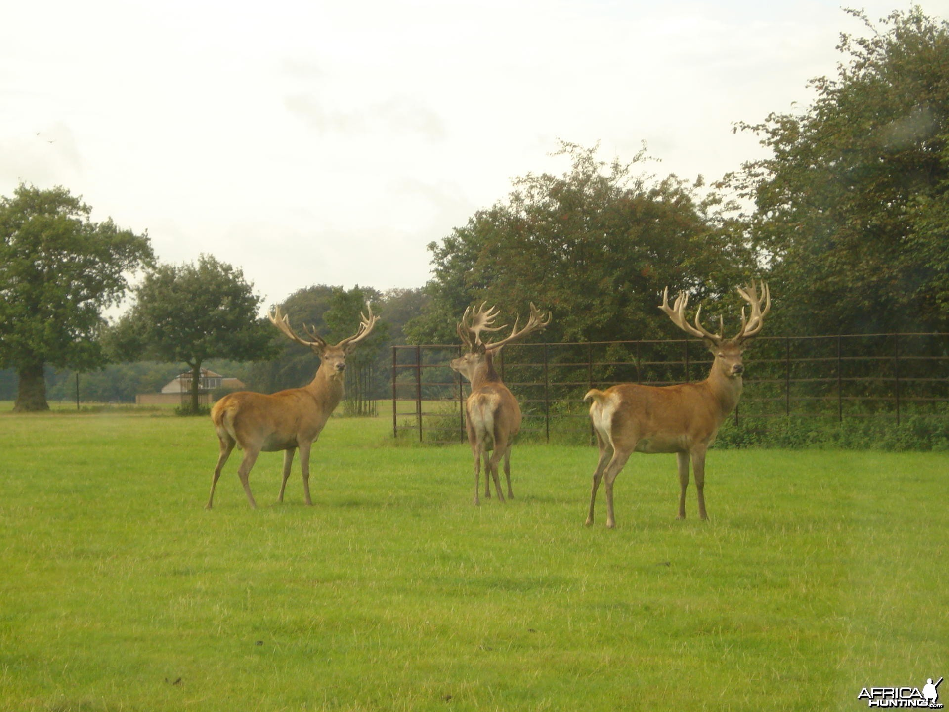 Red Stag stalking in the UK