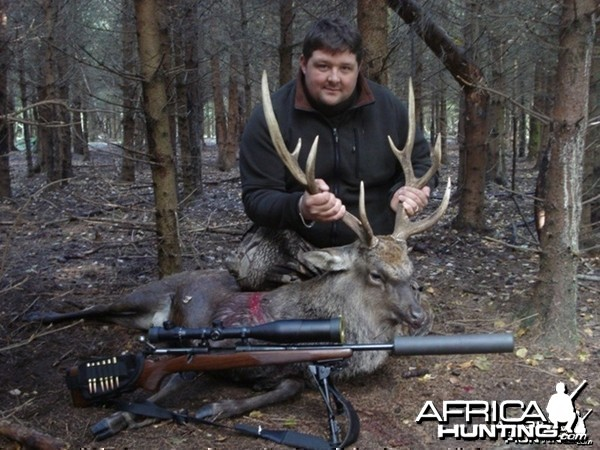 Sika Stag Hunts in the UK