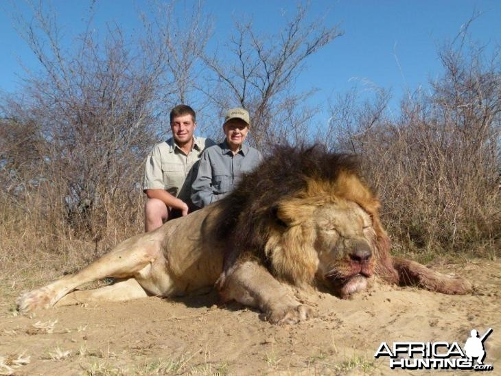 Black Maned Lion hunted with Hartzview Hunting Safaris
