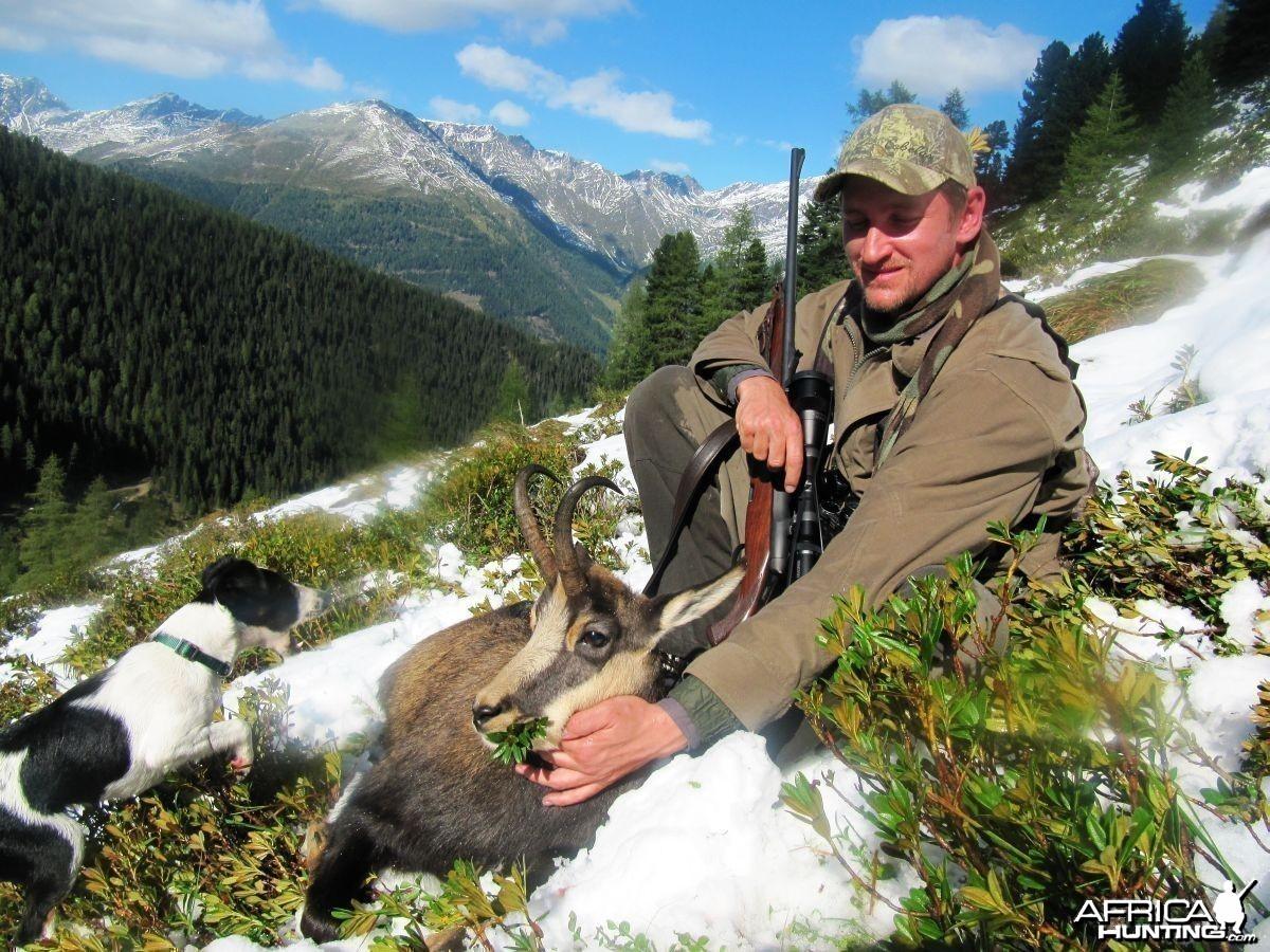Alpine Chamois