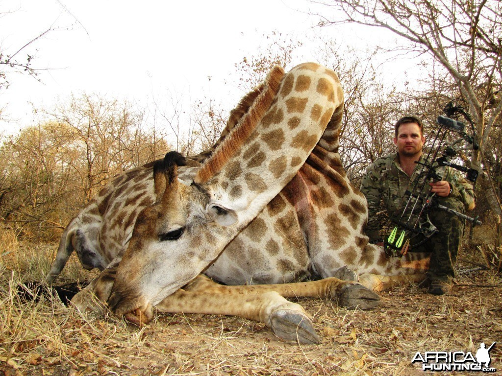 Bowhunting Giraffe in South Africa with Dalerwa Ventures for Wildlife