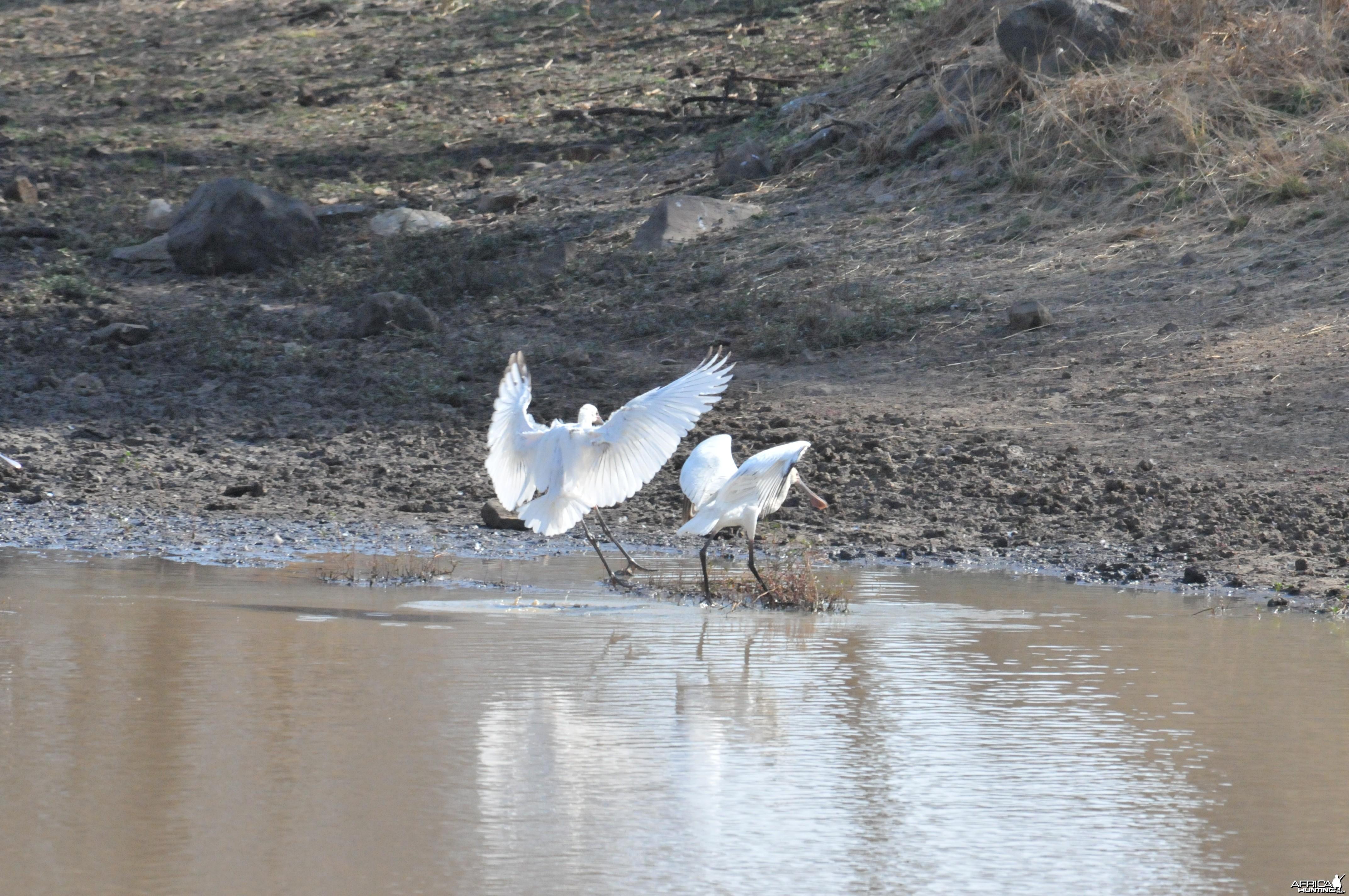Spatula Namibia