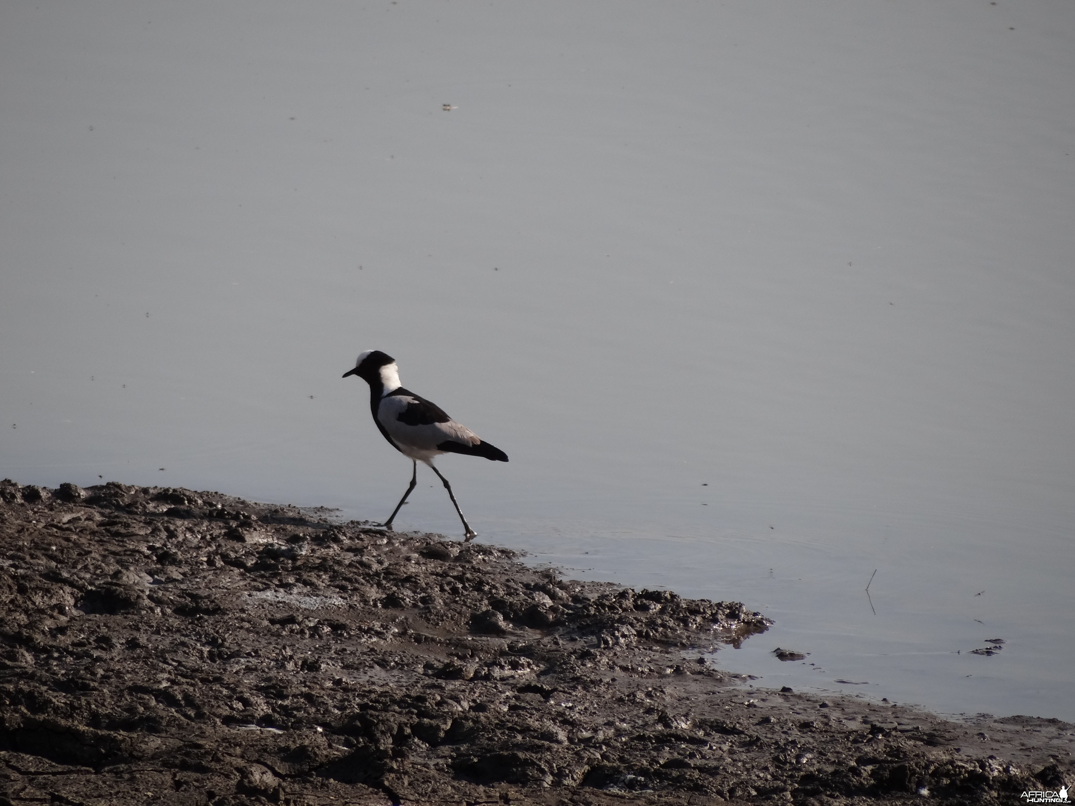 Bird Namibia