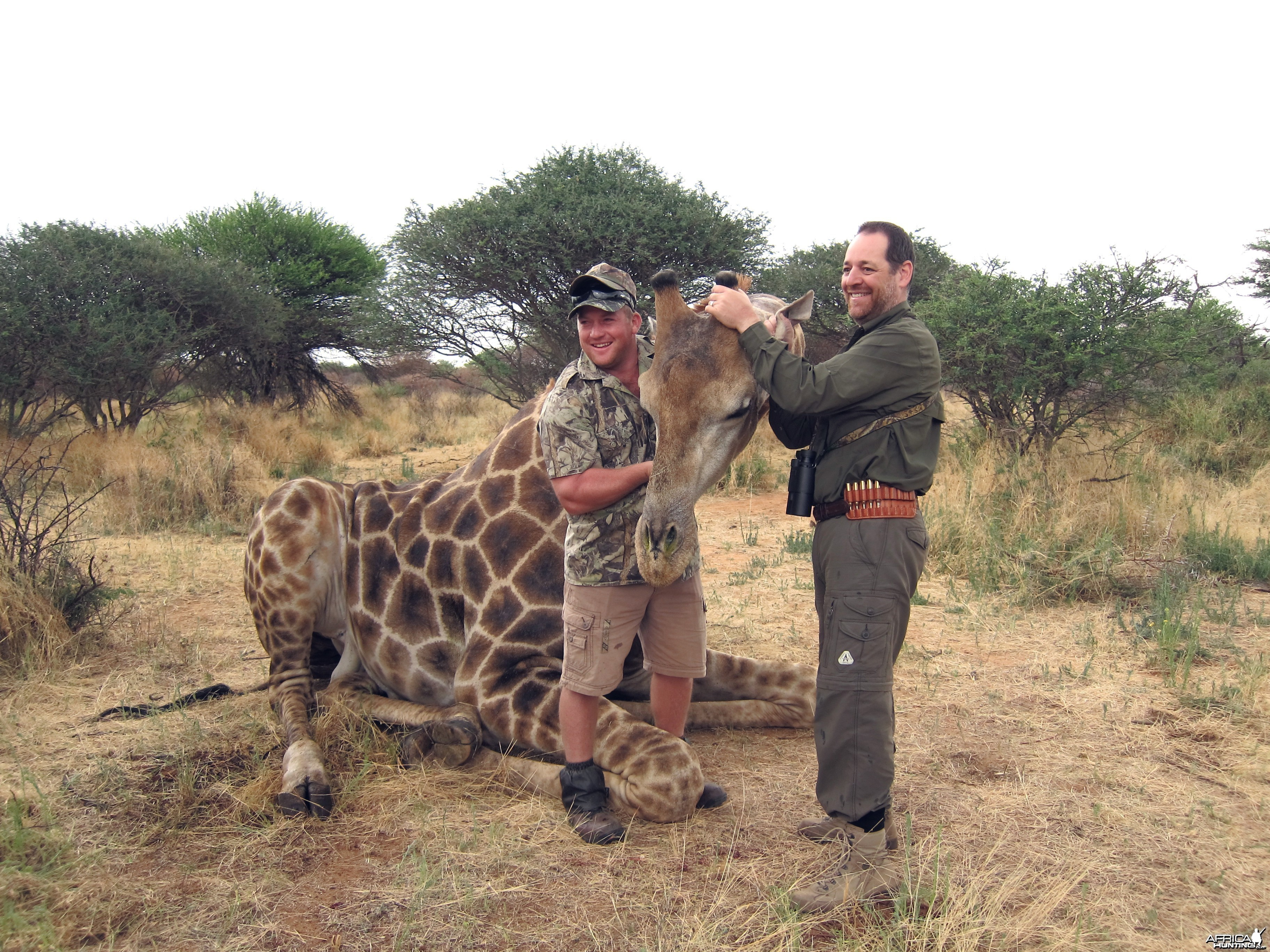 Setting up a Giraffe for trophy pictures