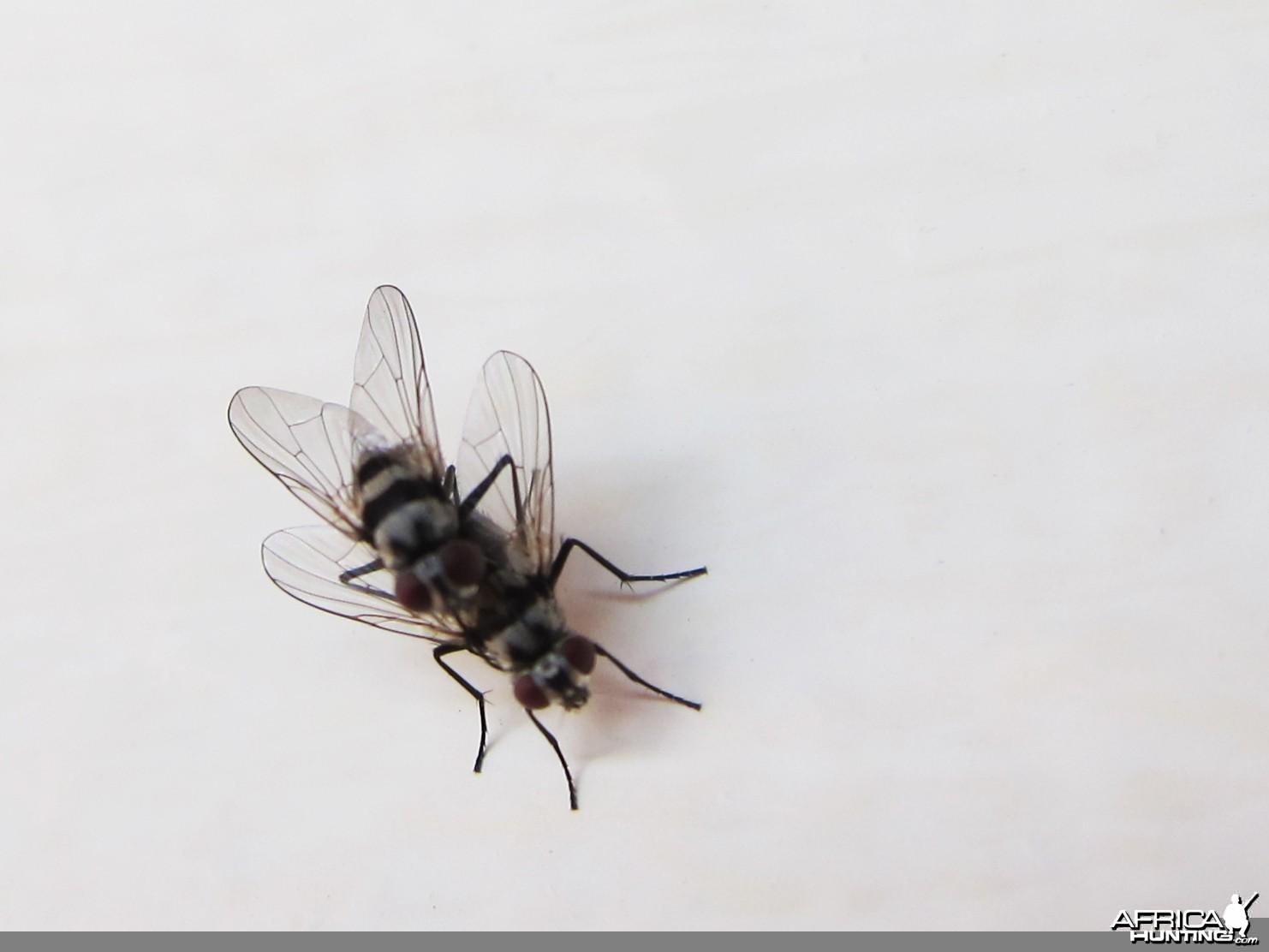 Flies Namibia