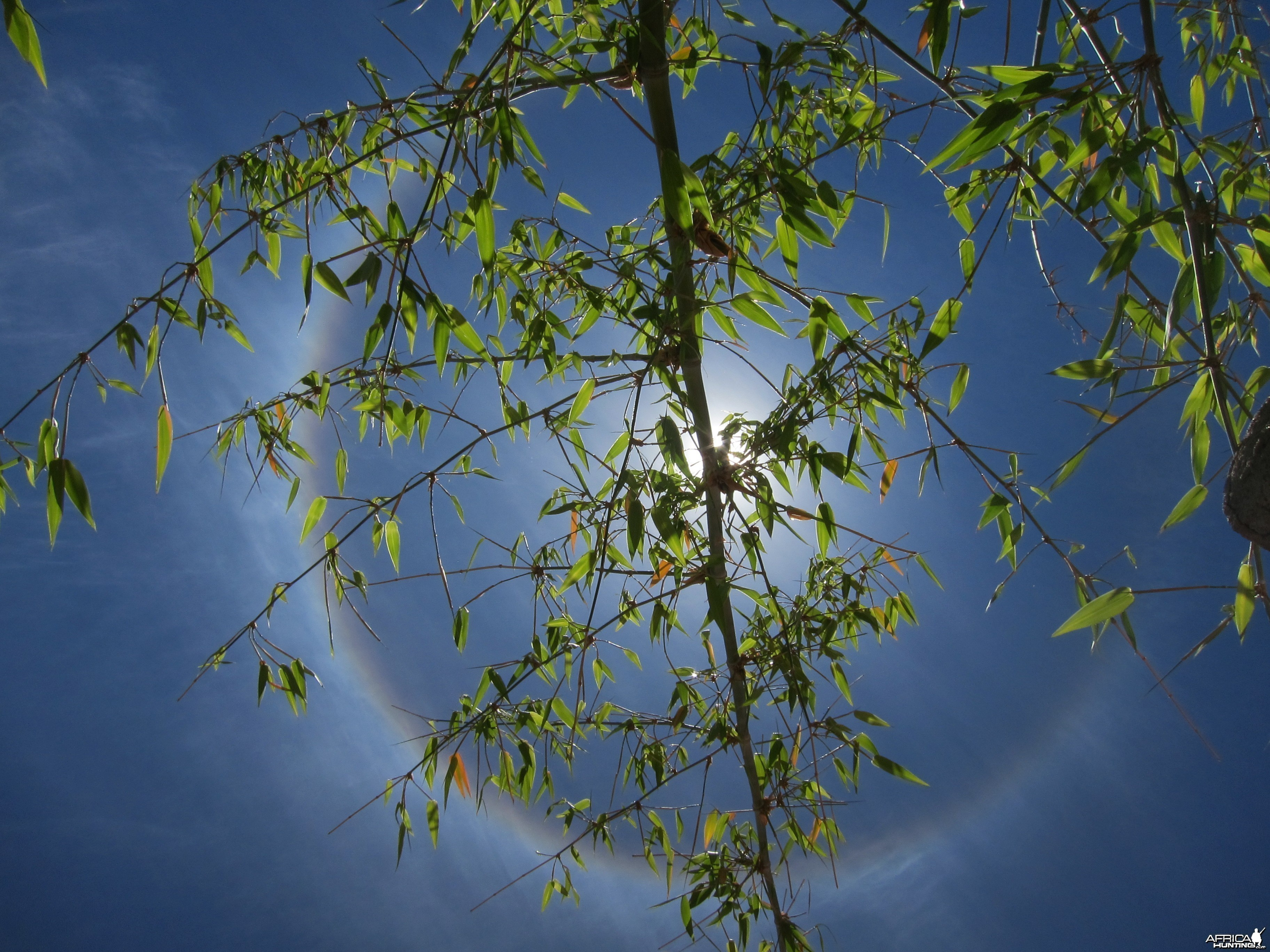 Sun Halo in Namibia