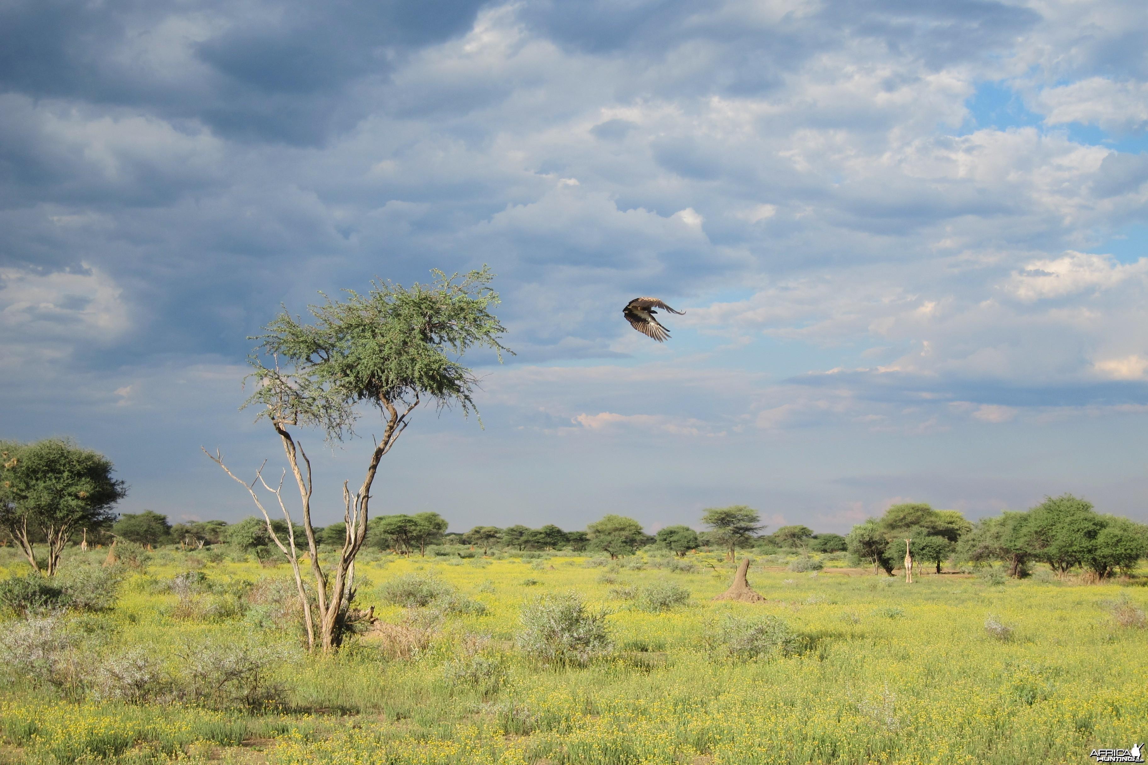 Vulture Namibia