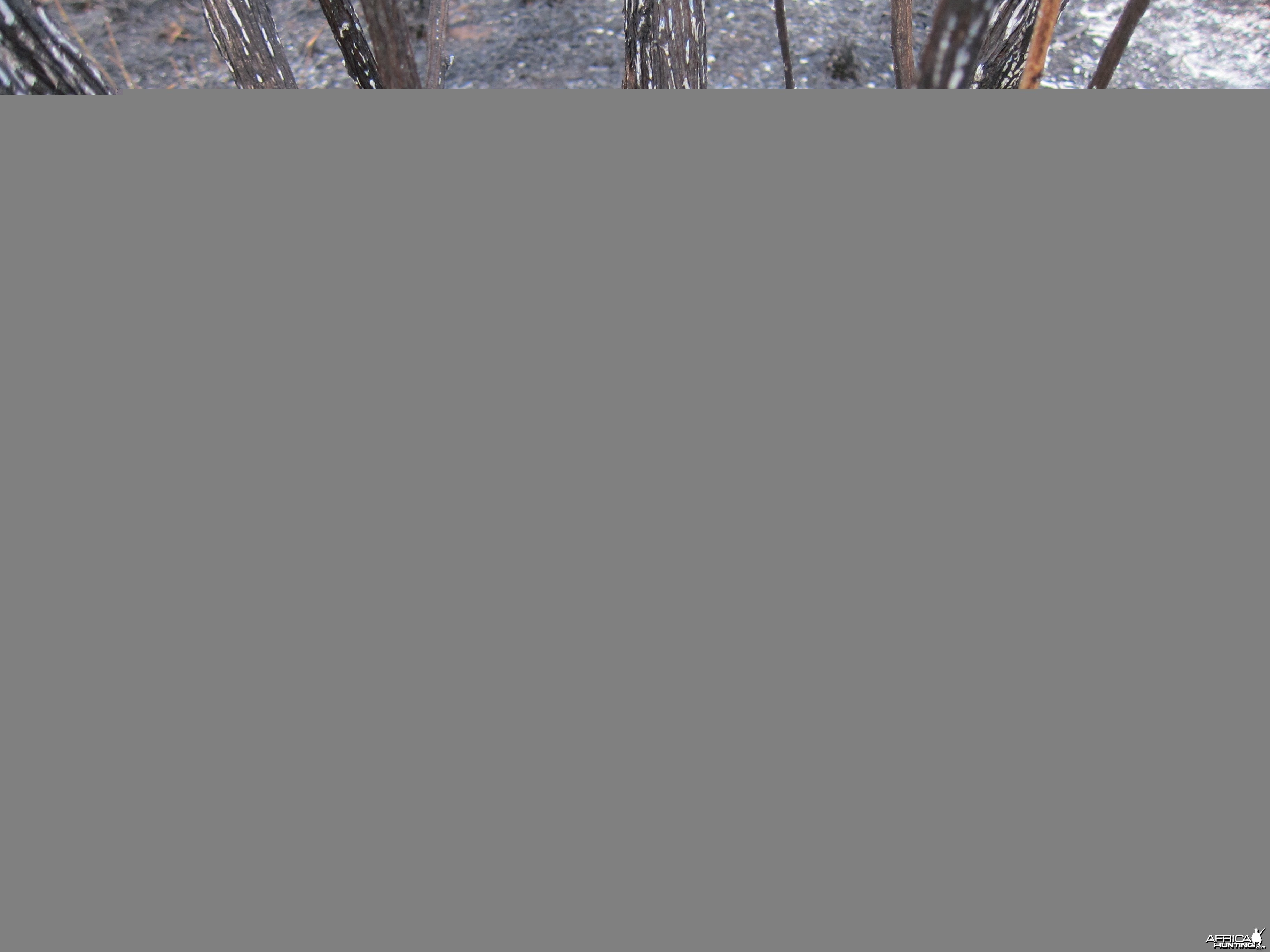 Controlled Bush Fire Namibia