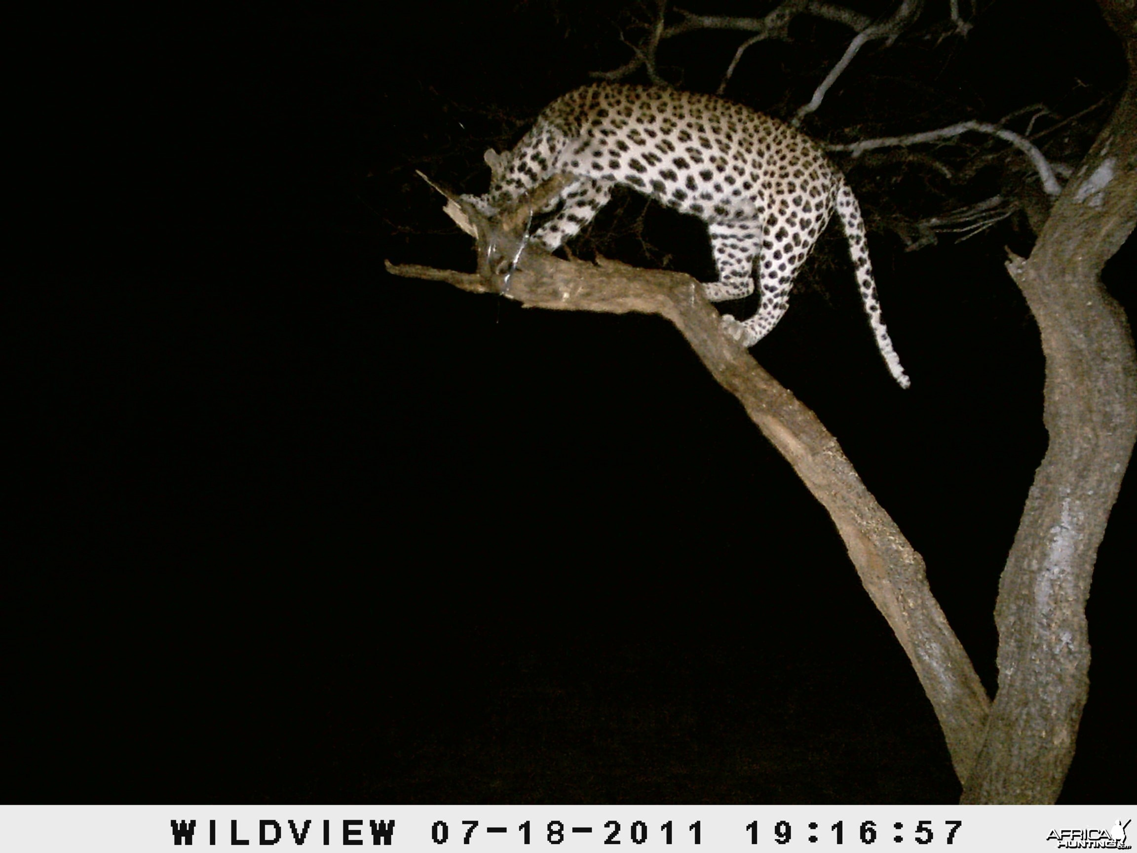 Leopard Namibia