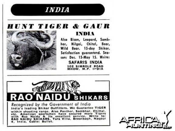 Hunting Tiger and Gaur in India