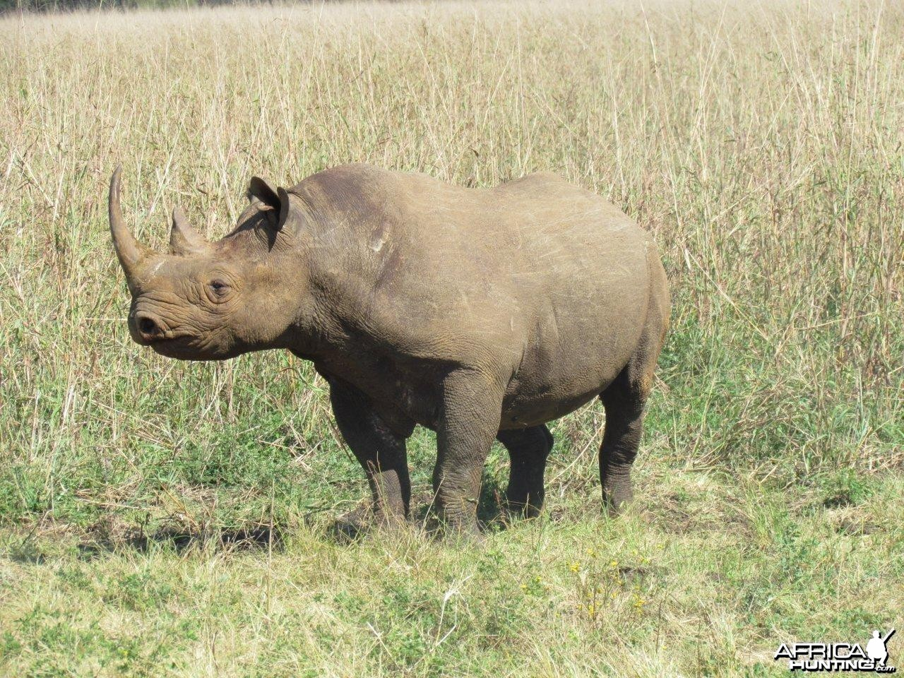 East African Black Rhino at Silent Valley Safaris
