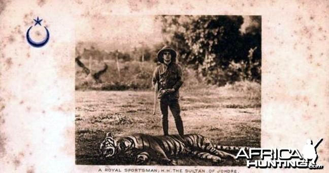 Tiger Hunting in Malaysia