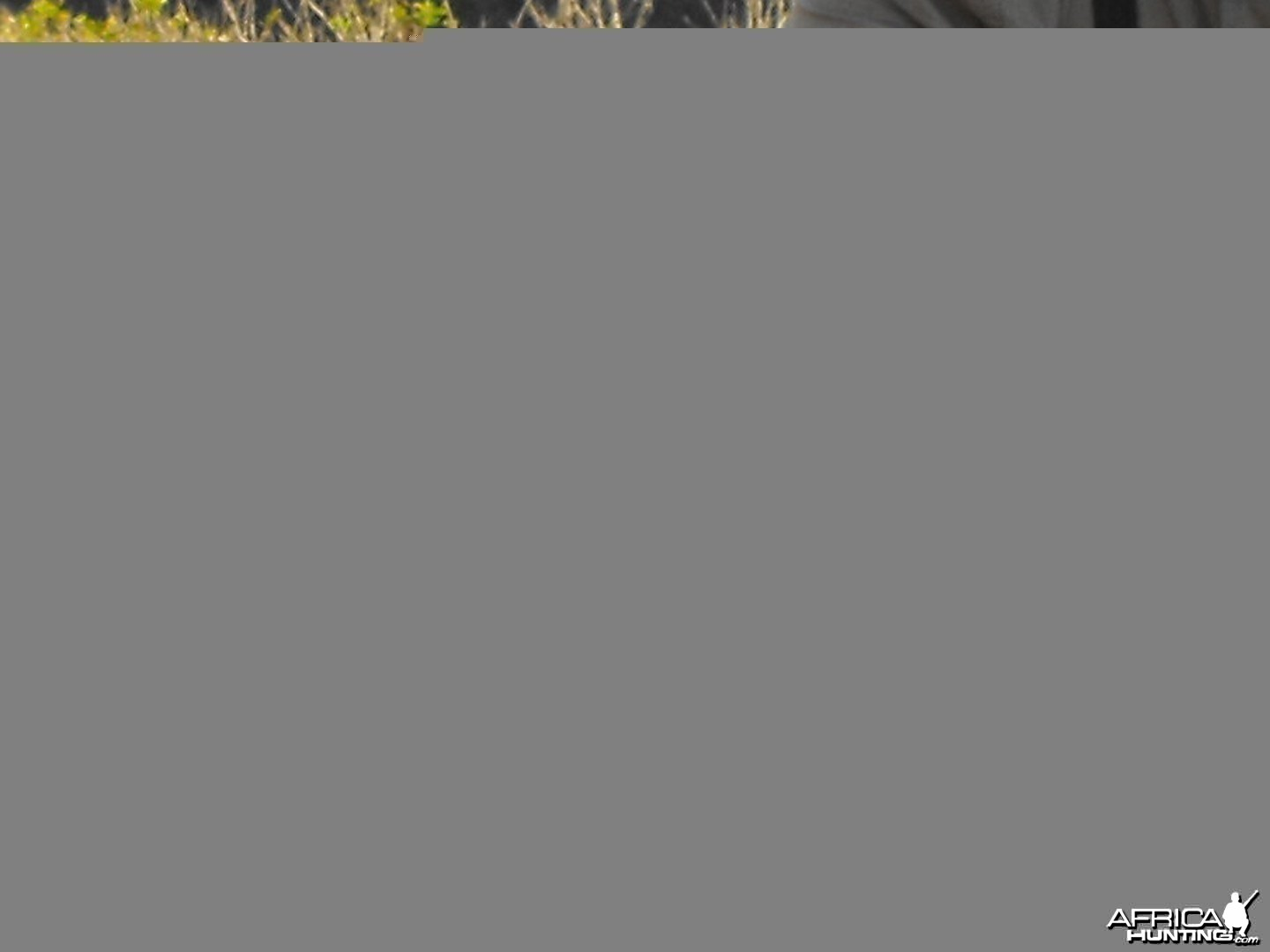 Mouflon sheep Hawaii