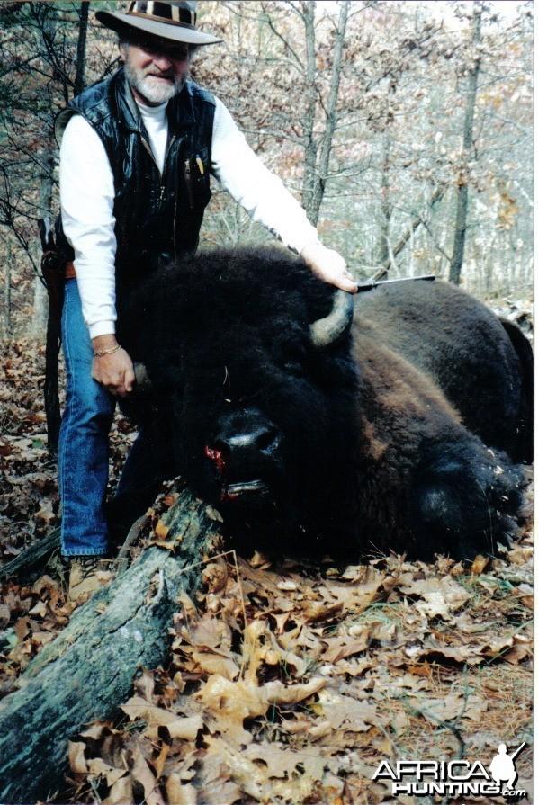 trophy bison