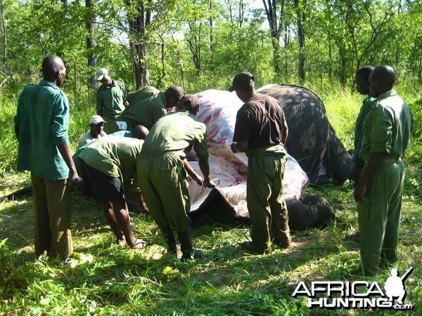 elephant retrieval