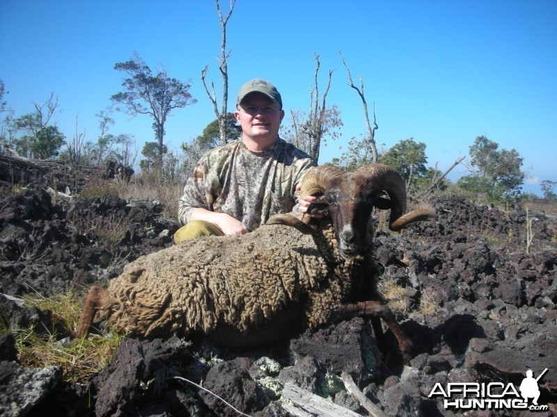 Black Hawaiian Sheep hunt on the Big Island of Hawaii