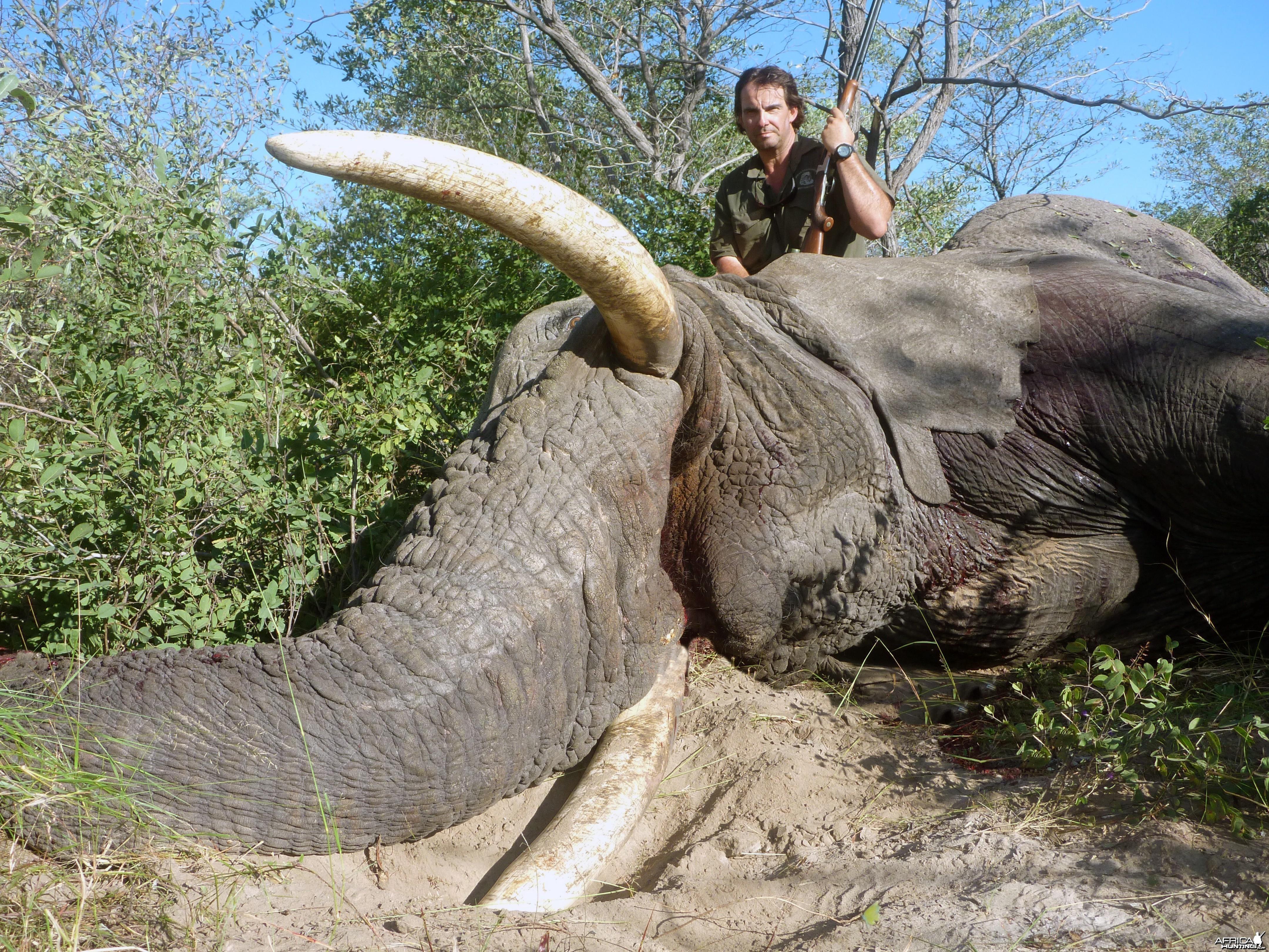 Elephant Botswana 2011 63 x 64 Lbs