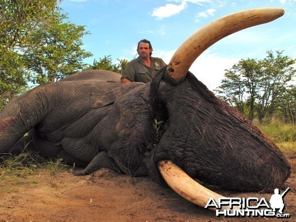 Elephant Botswana 2011 57x54