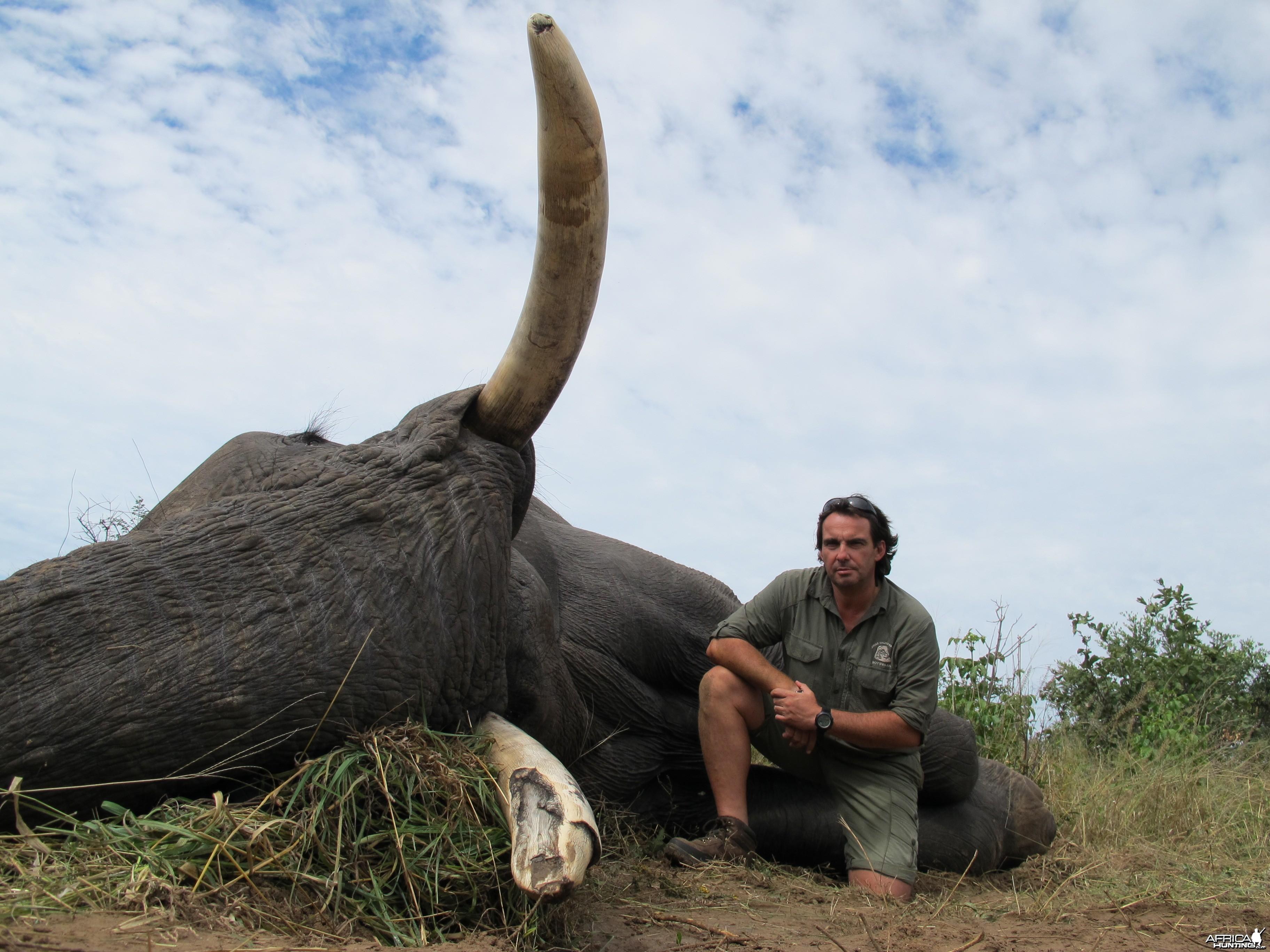 Elephant Botswana 2011 67 x 64 Lbs