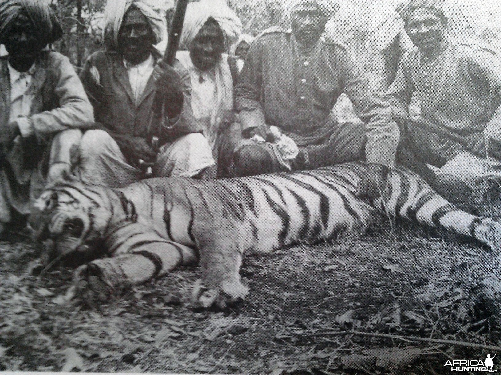 Shikaris Tiger