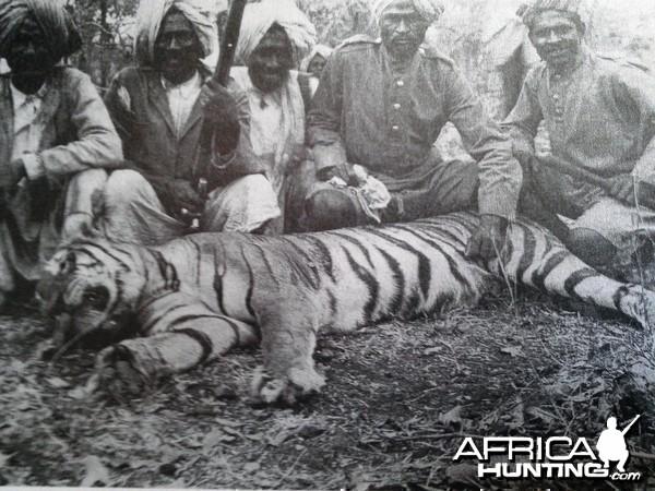 Shikaris Tiger