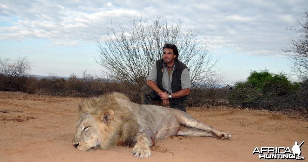 Masailand Lion - Tanzania
