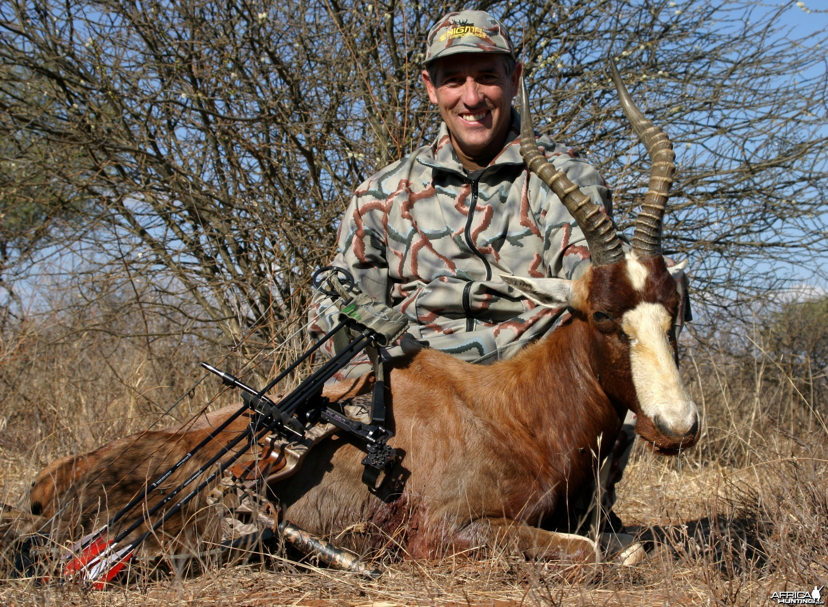 Limpopo Blesbuck