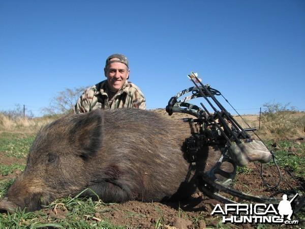 East Cape Feral Boar