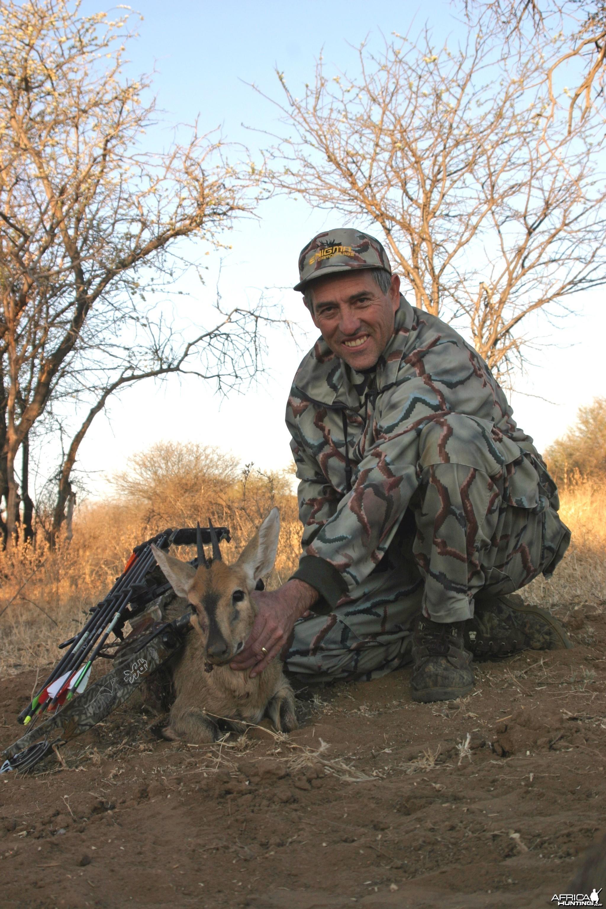 Bush Duiker-Limpopo
