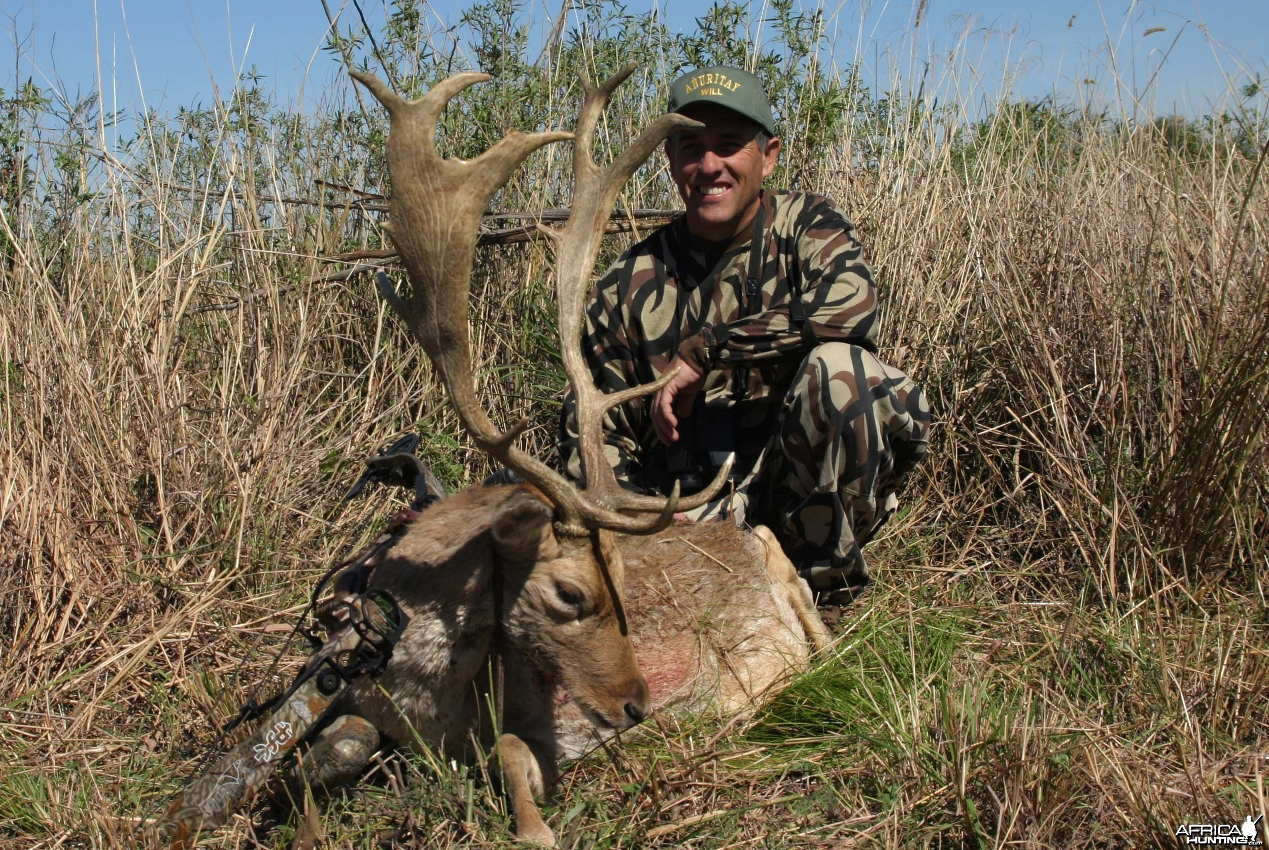 Fallow deer-Argentina