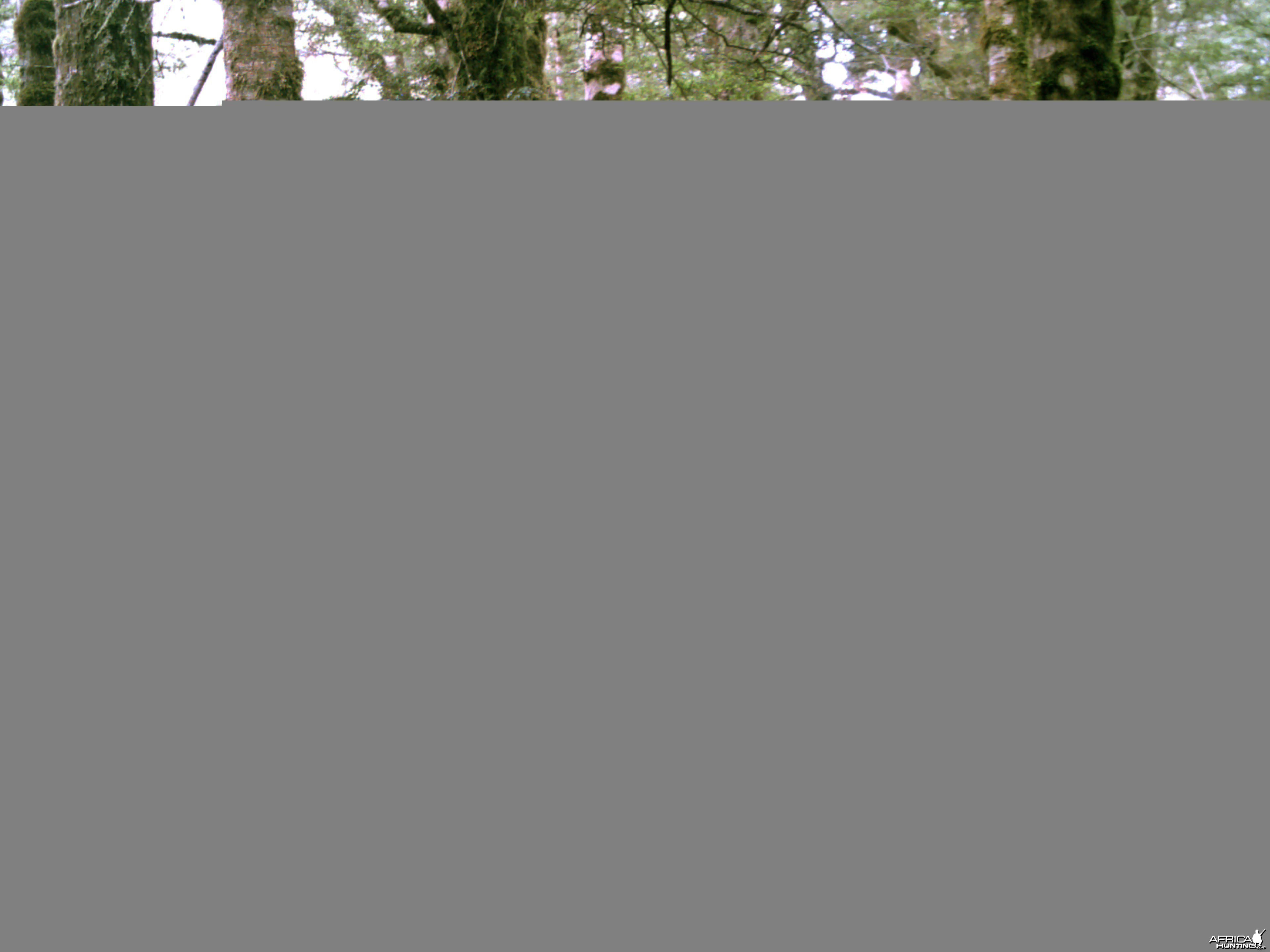 New Zealand free-range Red Stag