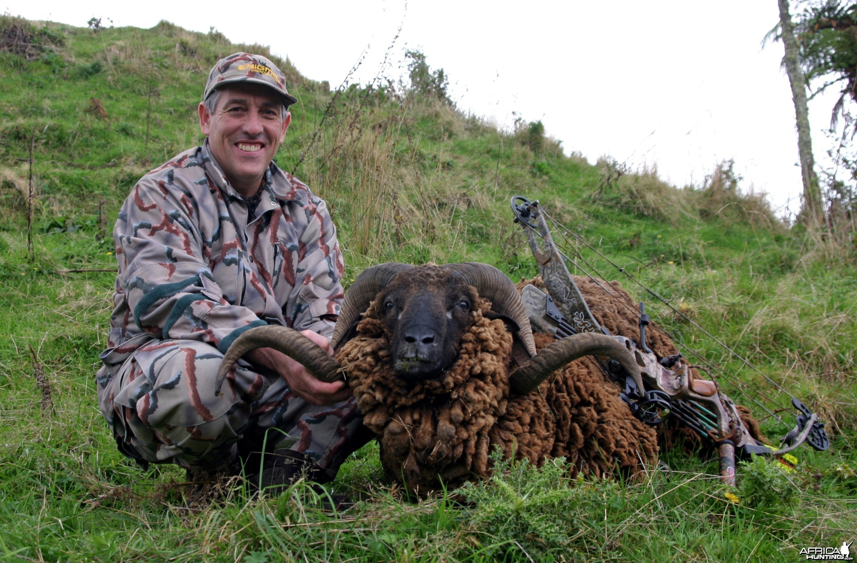 New Zealand Arawapa Ram-#4 SCI