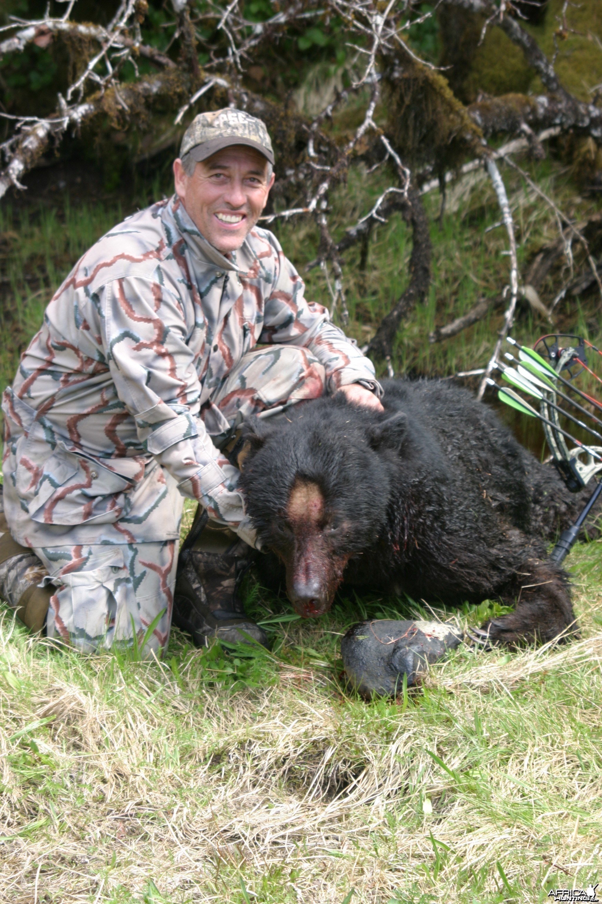 Prince of Wales Coastal Black Bear