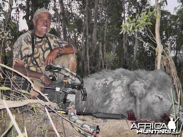 Feral Boar-Australia