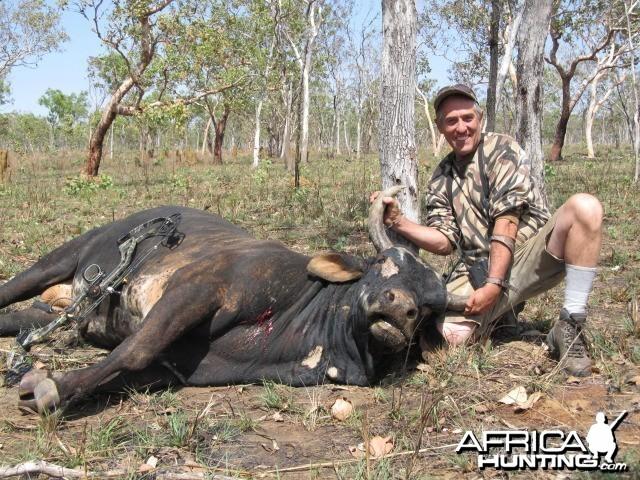 Scrub Bull-Australia