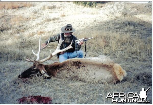 nontypical bull elk