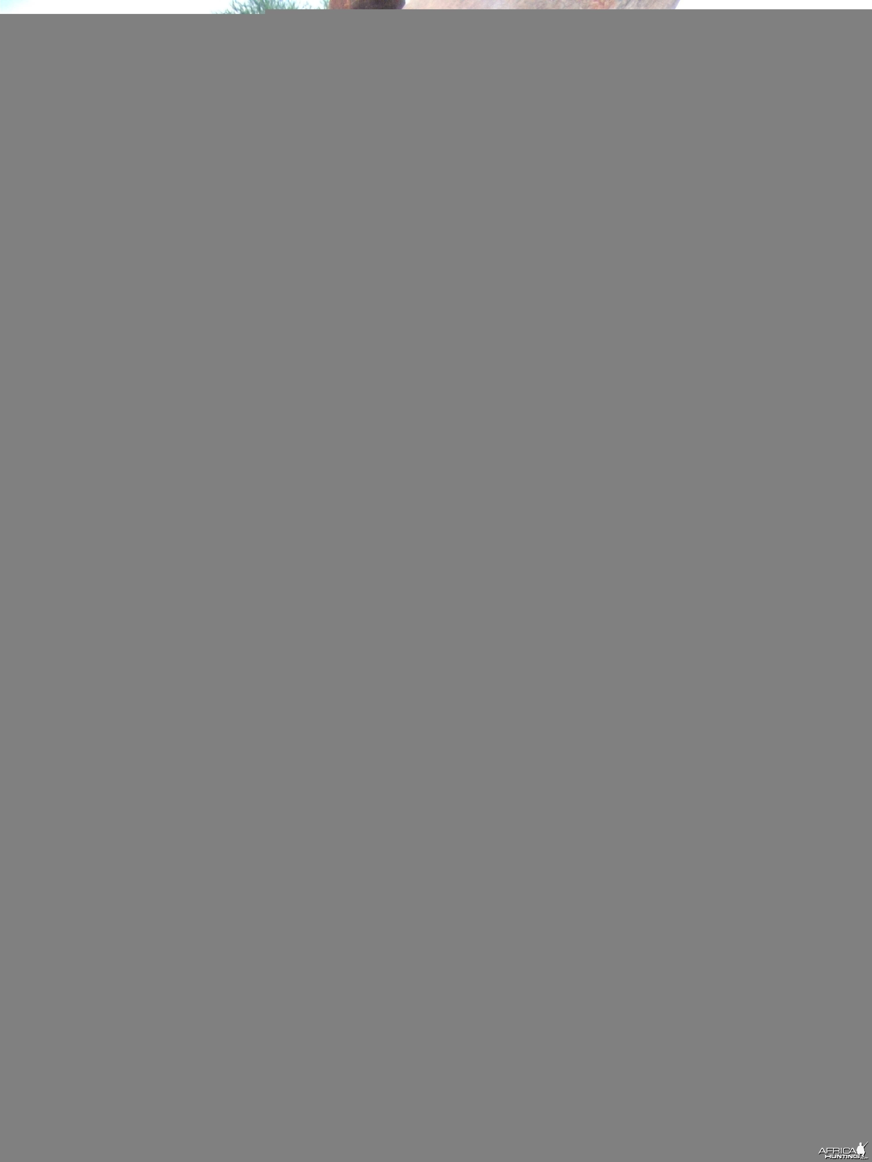 Three horned Greater Kudu hunted in Namibia