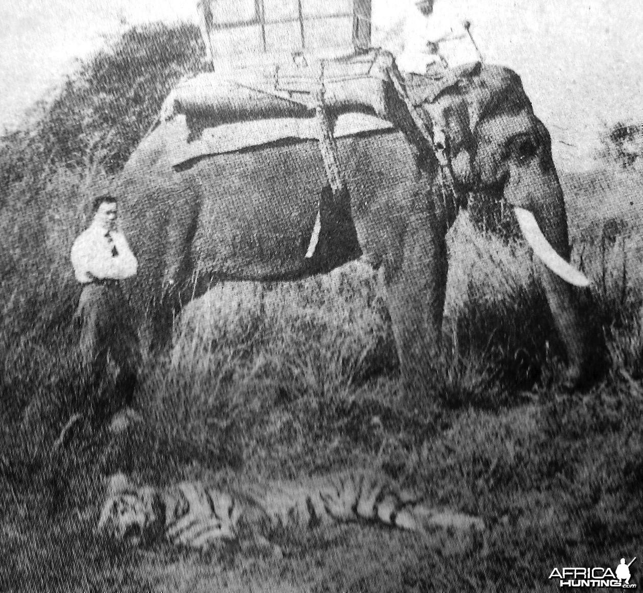 Hunting Tiger 1886