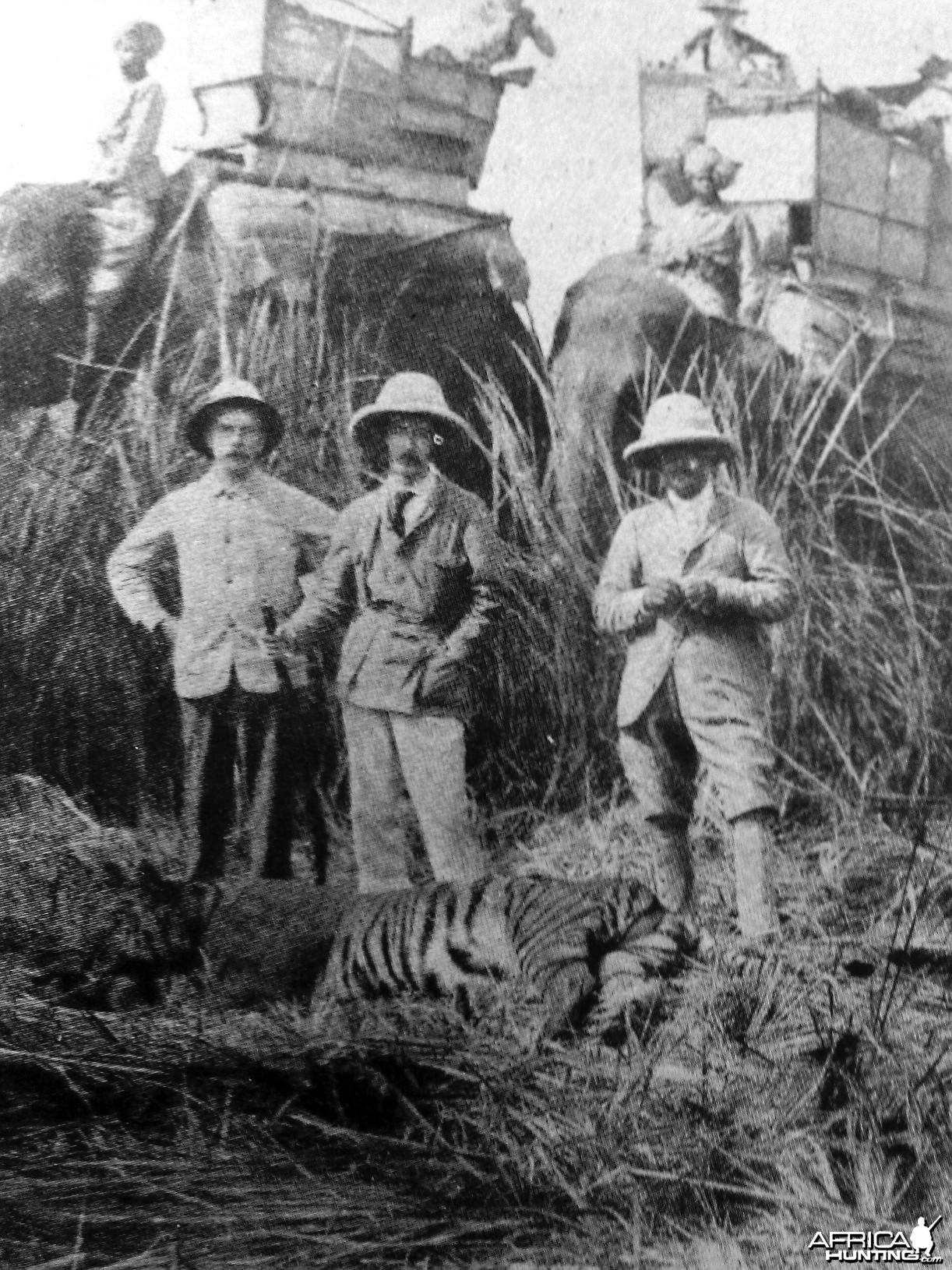 Hunting Tiger 1889
