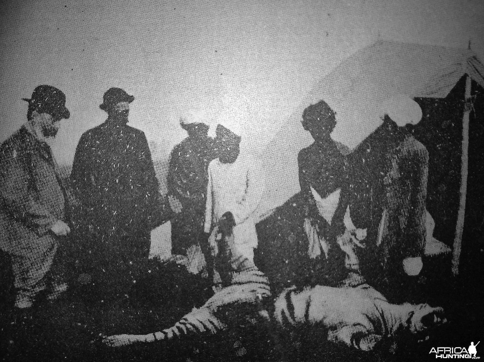 Tiger being skinned 1885