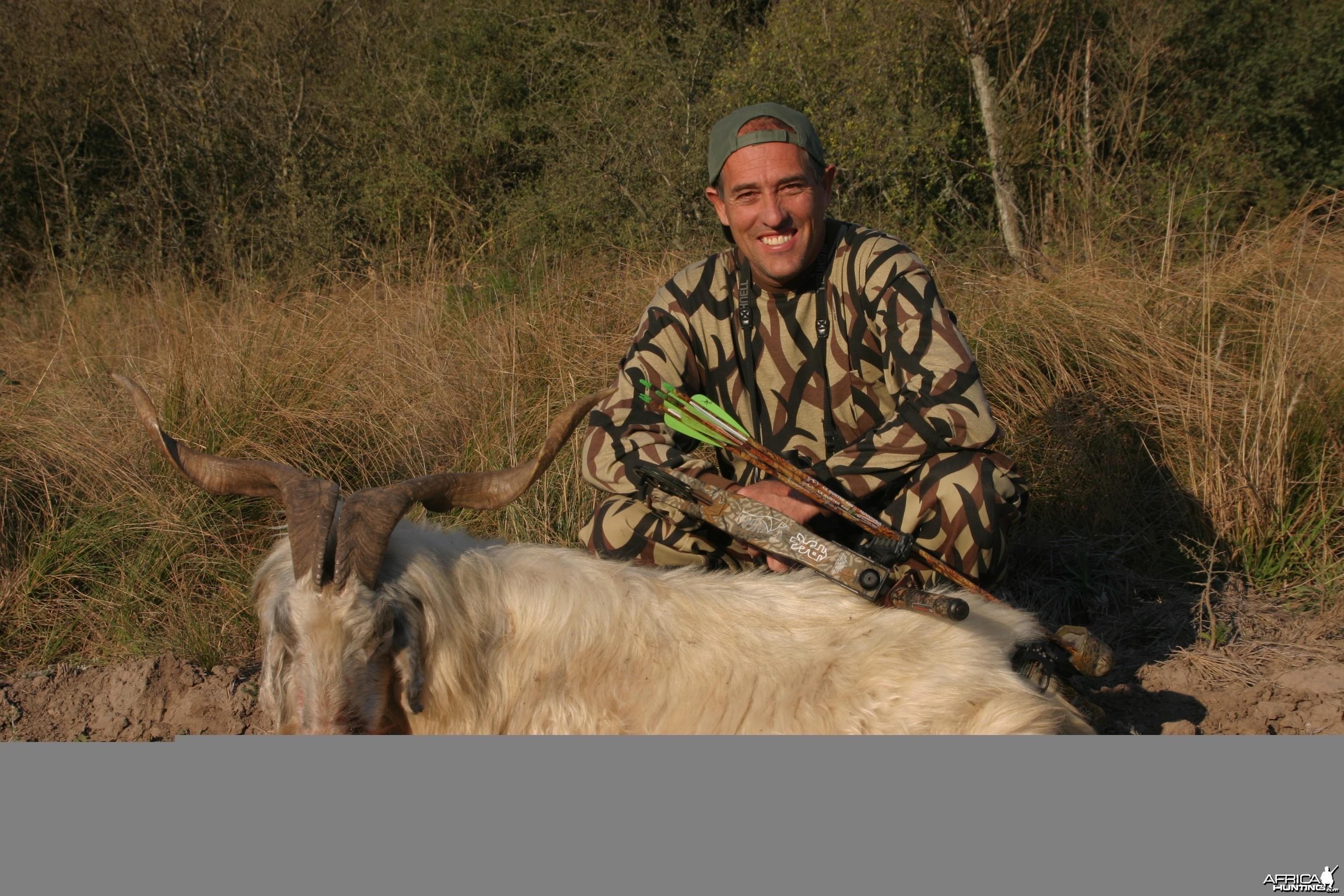 Feral Goat- Argentina