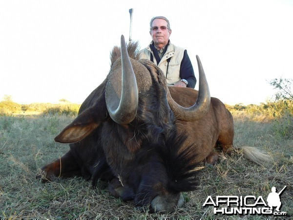 Hunting Black Wildebeest in Namibia