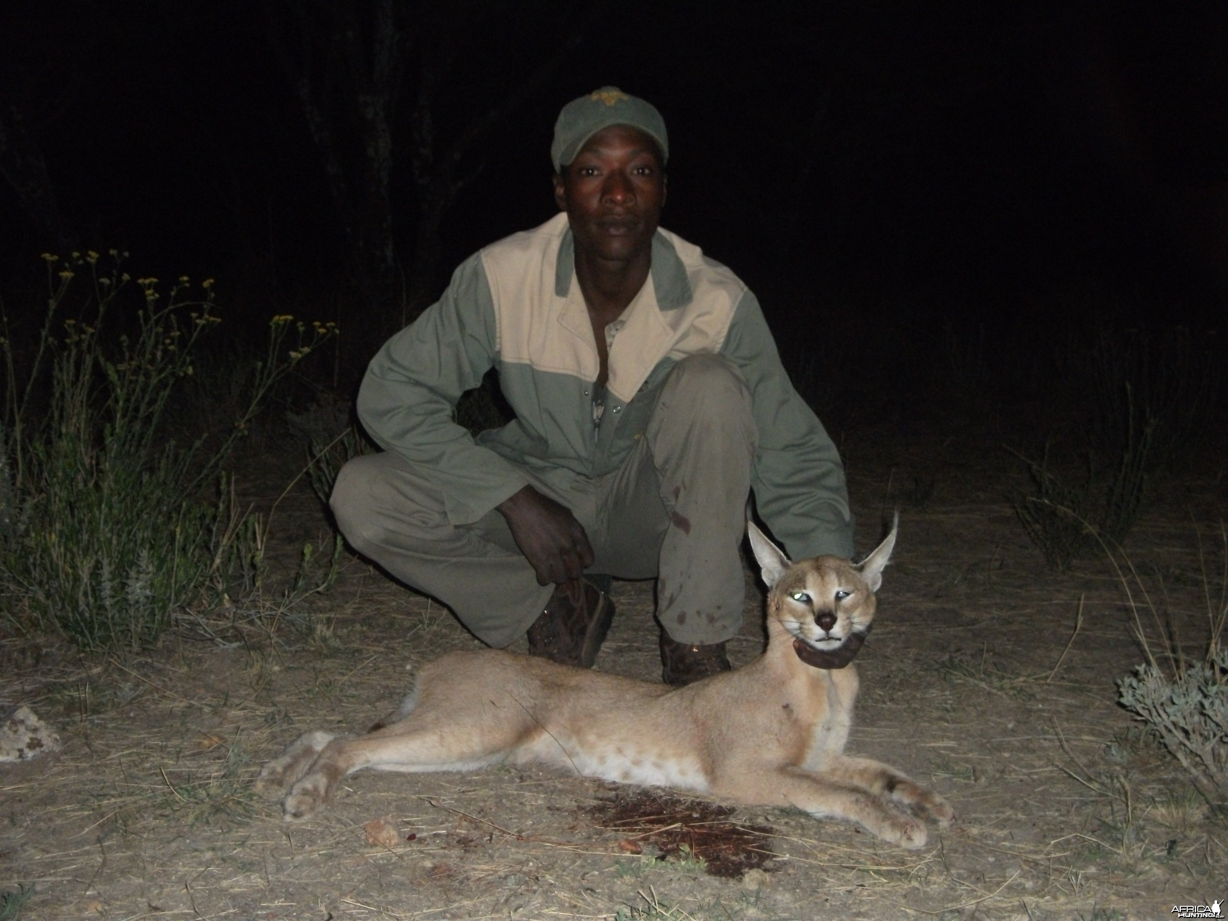 Hunting Caracal in Namibia