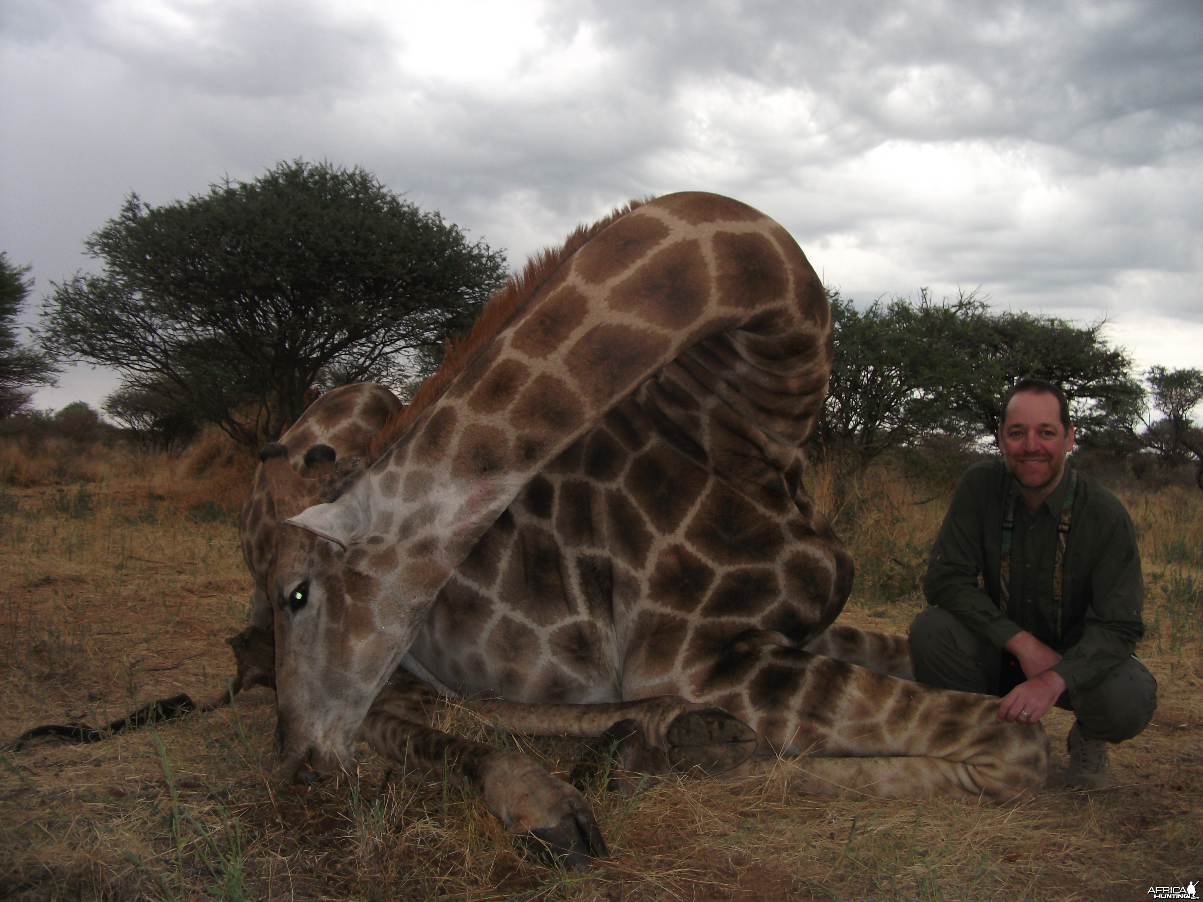 Hunting Giraffe in Namibia