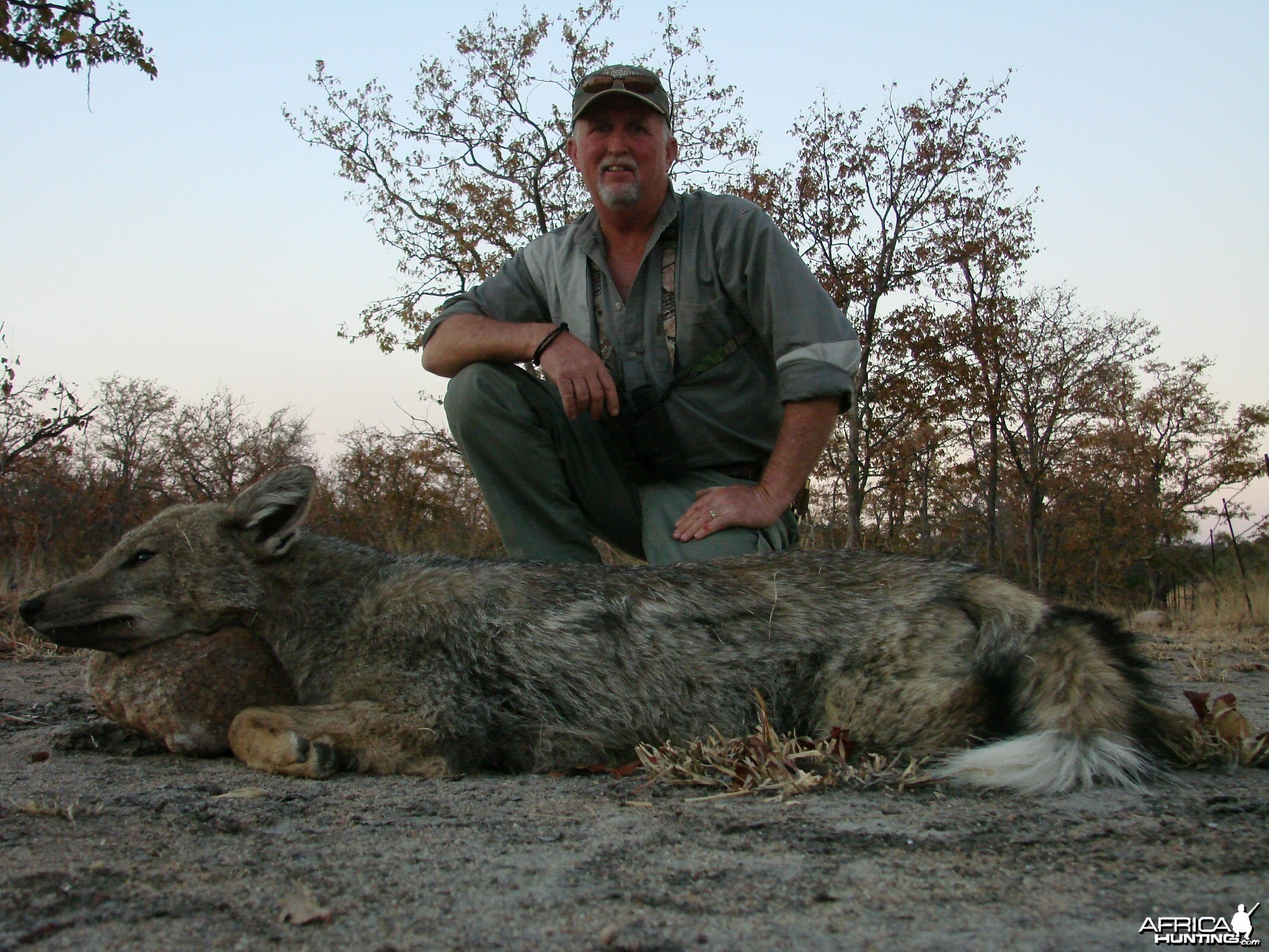 Side stripped jackal  Zimbabwe 2007
