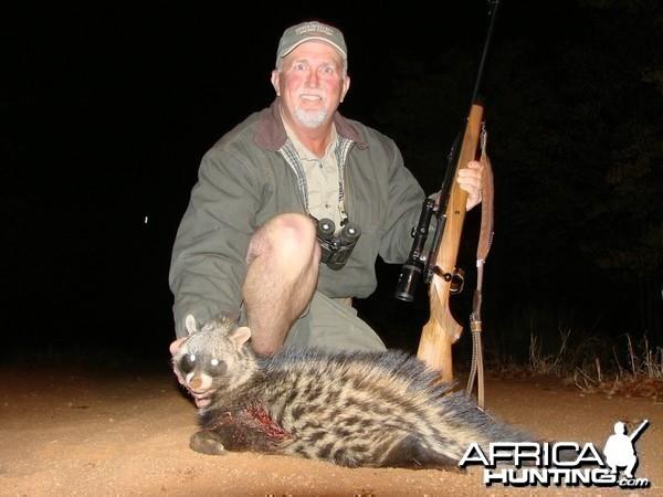 Civet cat Imbezie Camp, Lowveld of Zimbabwe
